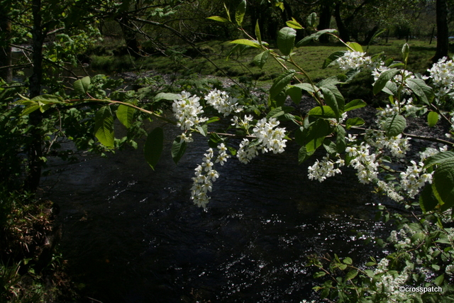 Blossom by the stream