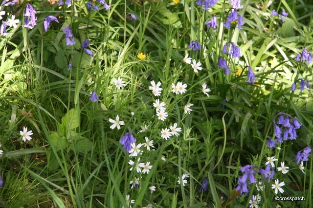 wild flowers underfoot